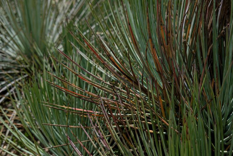 SanMiguel-Botanico-13.jpg
