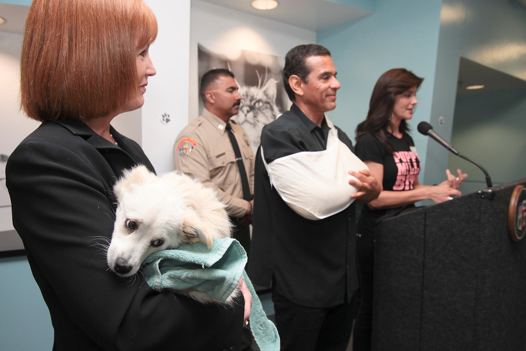 ". 7/19/2010: ""Tony\"" a dog at the shelter who has a broken leg as Mayor Antonio Villaraigosa  and Lu Parker speak at the South Los Angeles Animal Shelter Monday.    (David Crane/L.A. Daily News)"