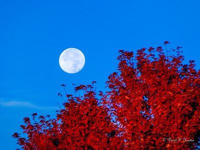 Moon & Trees October 2015