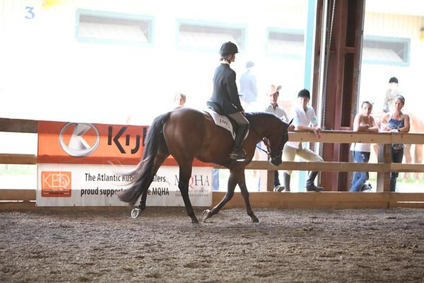 Small Fry Hunter Under Saddle & Equitation