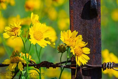 Fort Valley Flower Field