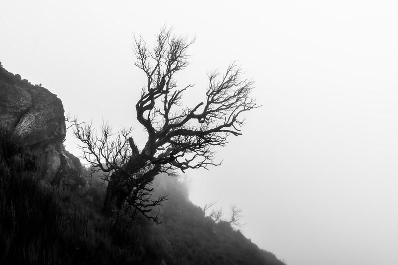171203 0938 - Portugal - Madeira - Curral das Freiras.jpg