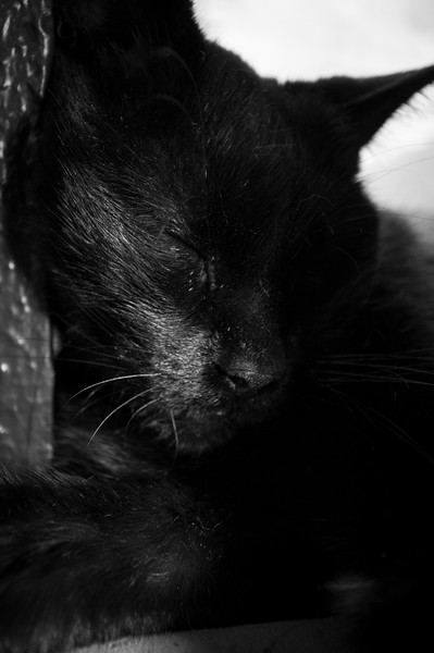 sleepy kitty.jpg