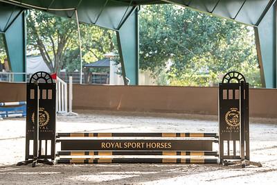 Royal Sport Horses Show I