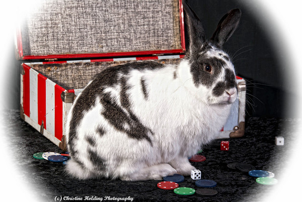 Jax the Rabbit for Animal Friends Rescue Project 2011