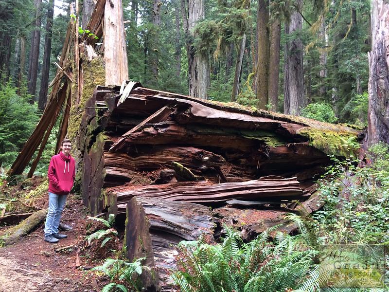 20141015_RedwoodsiPhone_0005.jpg