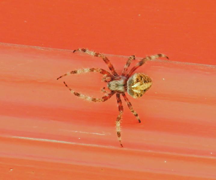 Over the door spider best.jpg