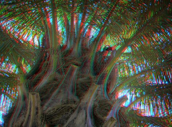 Berkeley Botanical Gardens - 3D Anaglyph