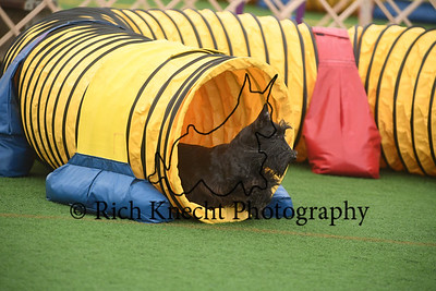 Montgomery Terrier Agility Cluster October 2-5