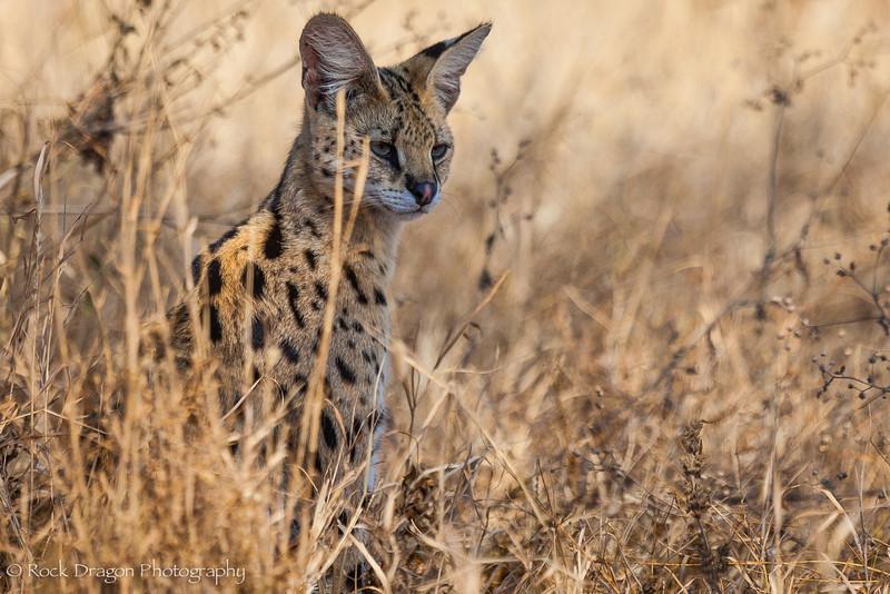 South_Serengeti-28.jpg