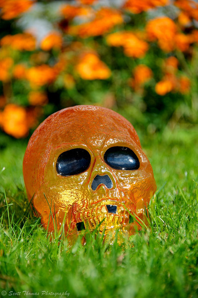 An orange skull rises out of the ground outside a house in Baldwinsville, New York.