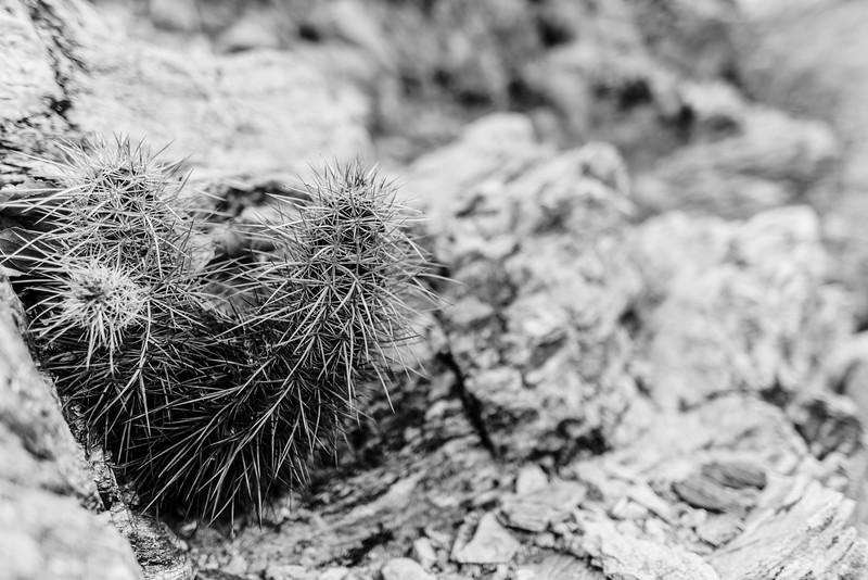 047-Death-Valley-Mountain-Cabins.jpg