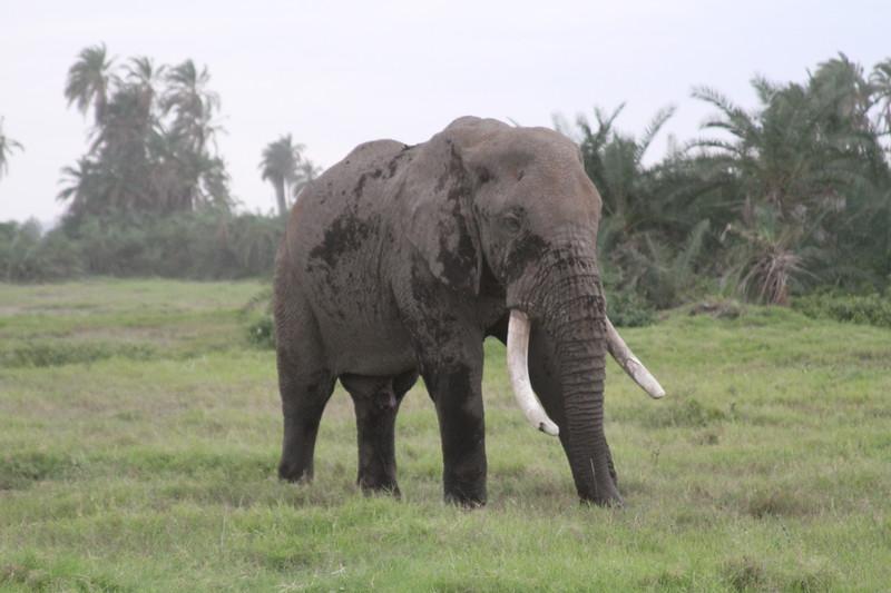 Kenya 2019 #2 1503.JPG