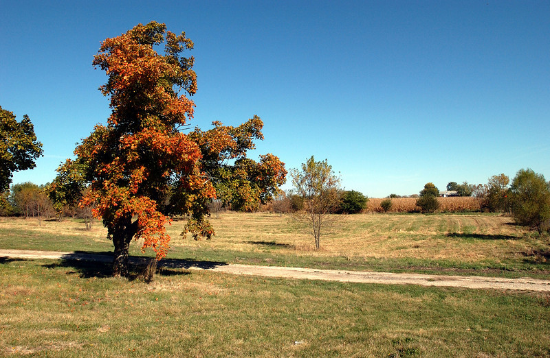 clip-015-autumn_tree-warren_co-14oct05-8496.jpg