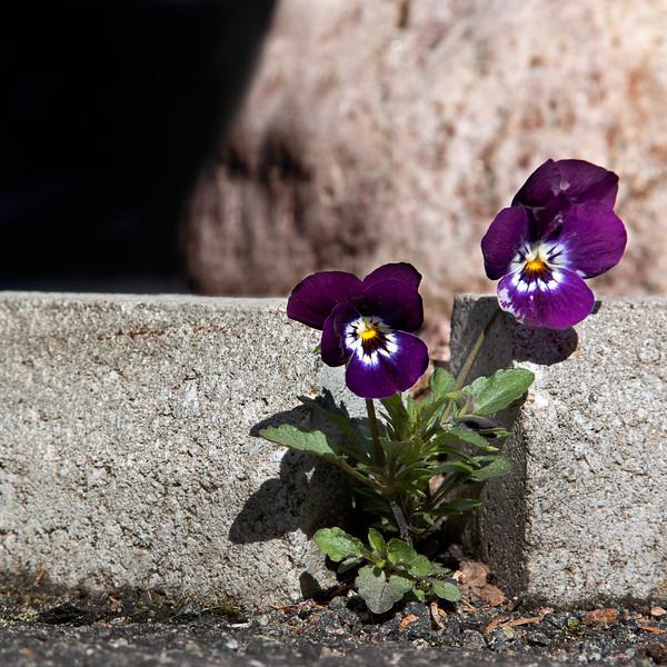 Dag_036_2012-maj-17_6431.jpg