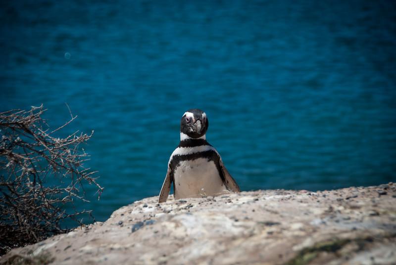 Puerto Madryn 201111 Valdes 210.jpg
