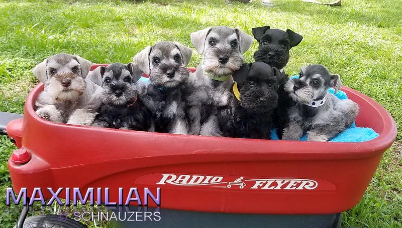 Paloma Pups 057.jpg
