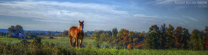 autumn 2014 - lone horse(ars banner,p).jpg