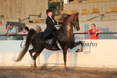 17. Adult 3 Gaited Show Pleasure