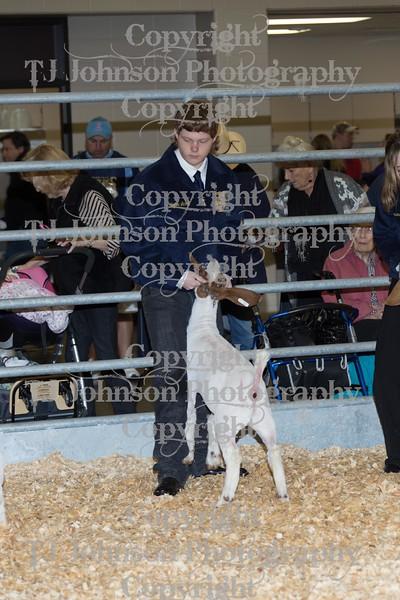 2016 KISD Goat Show Class 1
