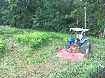 July Planting 2010