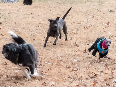 2019-01-09 Oreo, Scout, Alfie, and Morgan