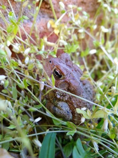 Toad-004.jpg