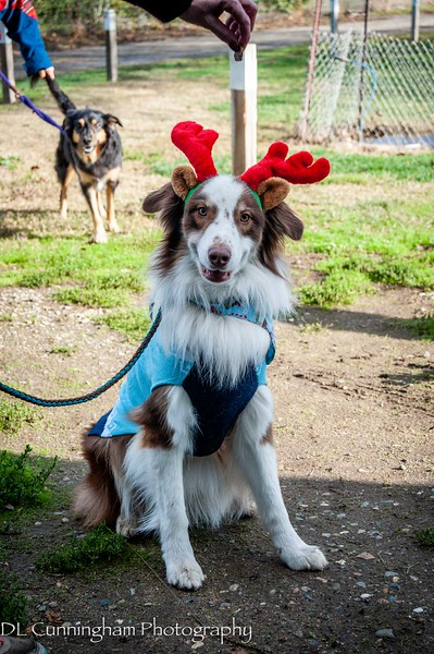 Western Agility Group (WAG)  Holiday Party 2019