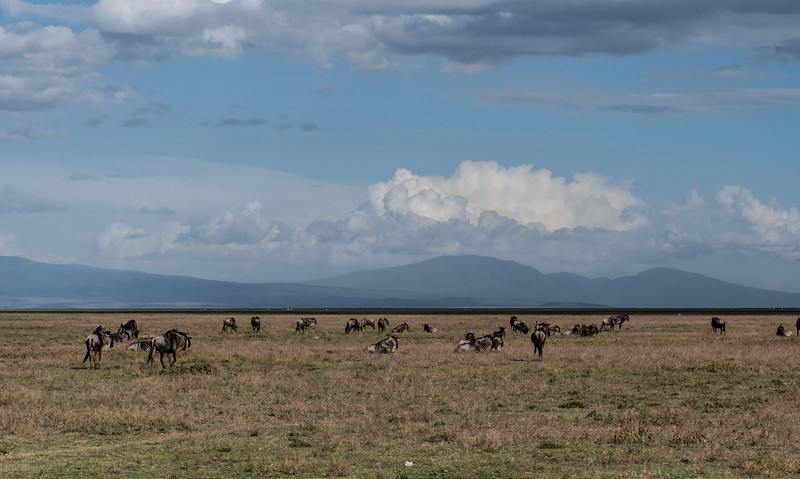 Tanzania_Feb_2018-440.jpg