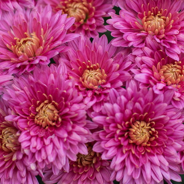 10_2018 Flower Calendar_MG_8182.jpg