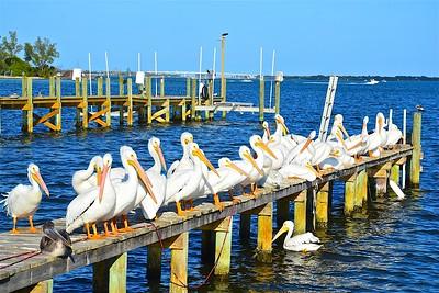 Birding in South Florida