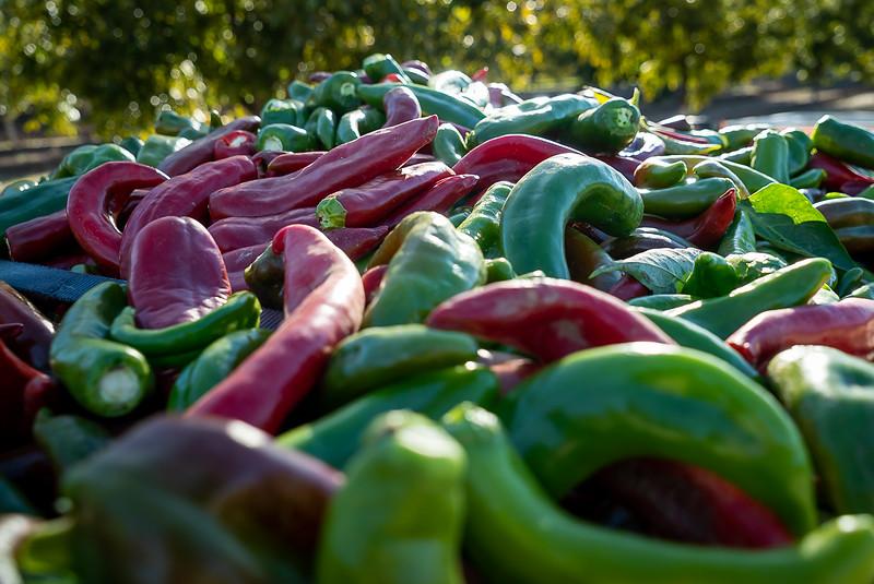 Fresh Chile Co