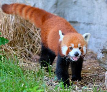 Saint Louis Zoo, 20140620