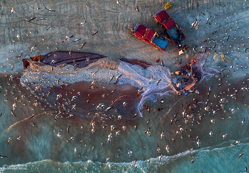 Sardine Season (66)- Dhofar.jpg