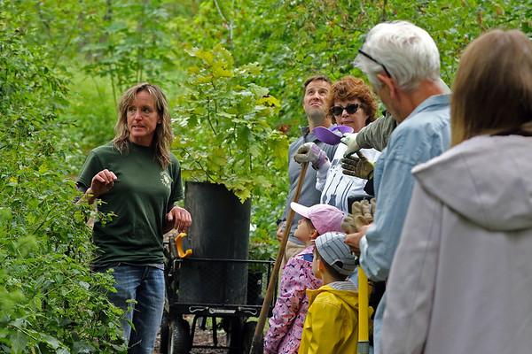 Glen Ellyn Tree Planting