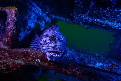 Edmonds Underwater Park 2017-02-25