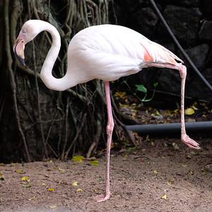 Dehiwala Zoo