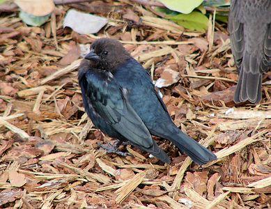 Parking Lot Birds