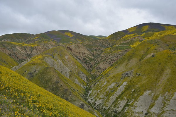 Wildflower bloom at Carrizo Plain National Monument