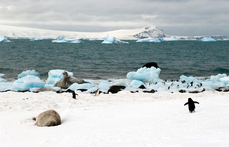 091204_penguin_island_8400.jpg