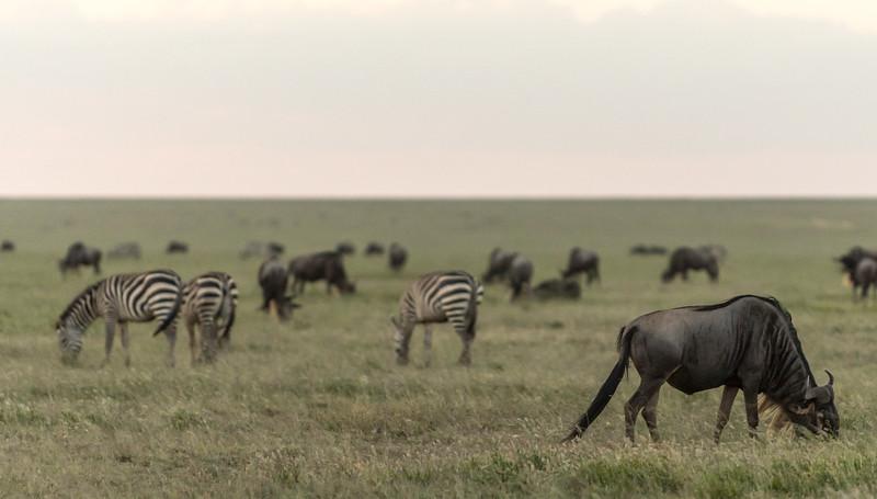 Tanzania_Feb_2018-628.jpg