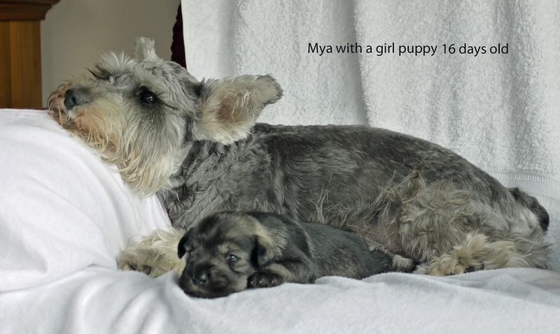Mya with girl puppy 16 days old.jpg