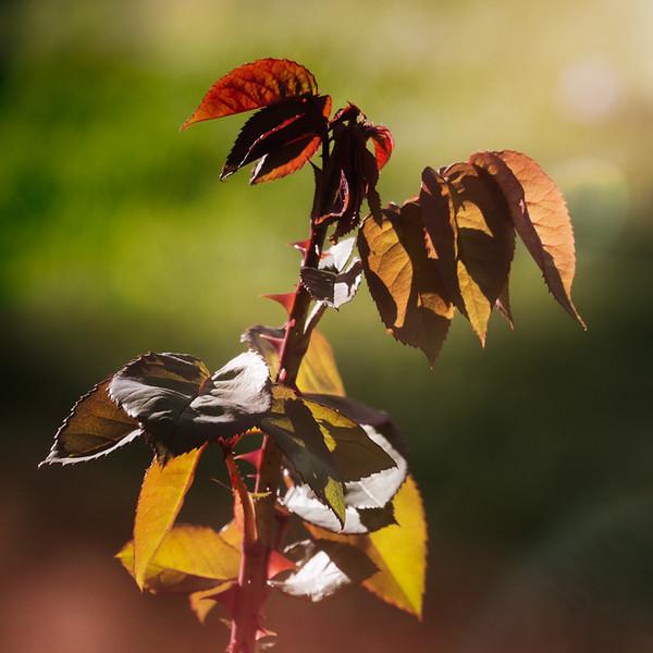 March 4 - Birth of a rosebush.jpg