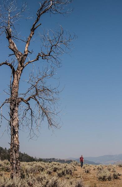 Yellowstone-8947.jpg