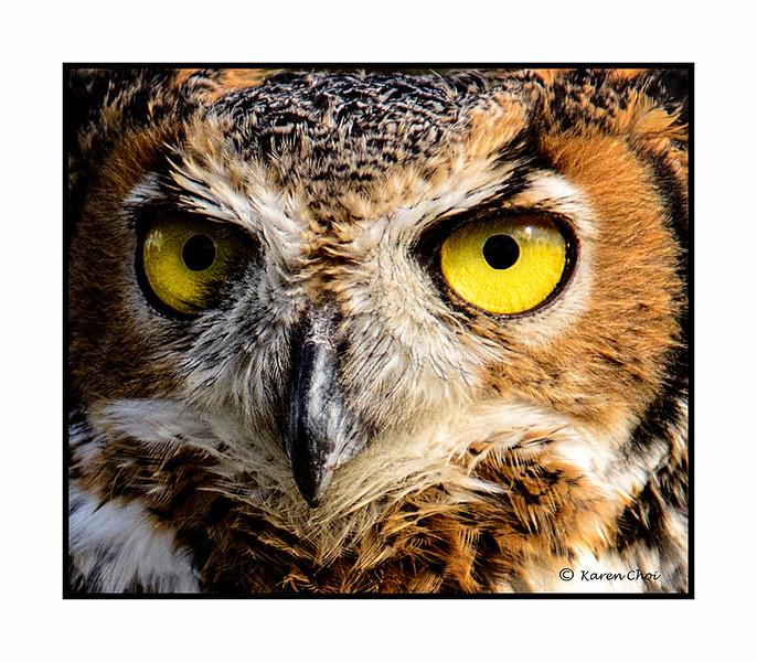 owl eyes sm.jpg