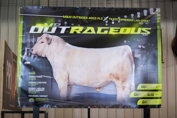 display bulls