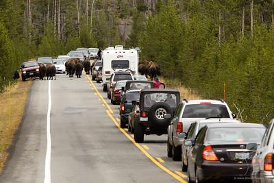 Wildlife Corridors Project