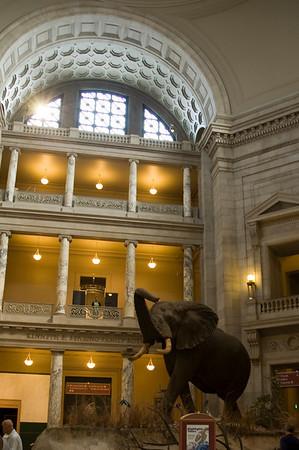 National Museum of Natural History - Washington, D.C.