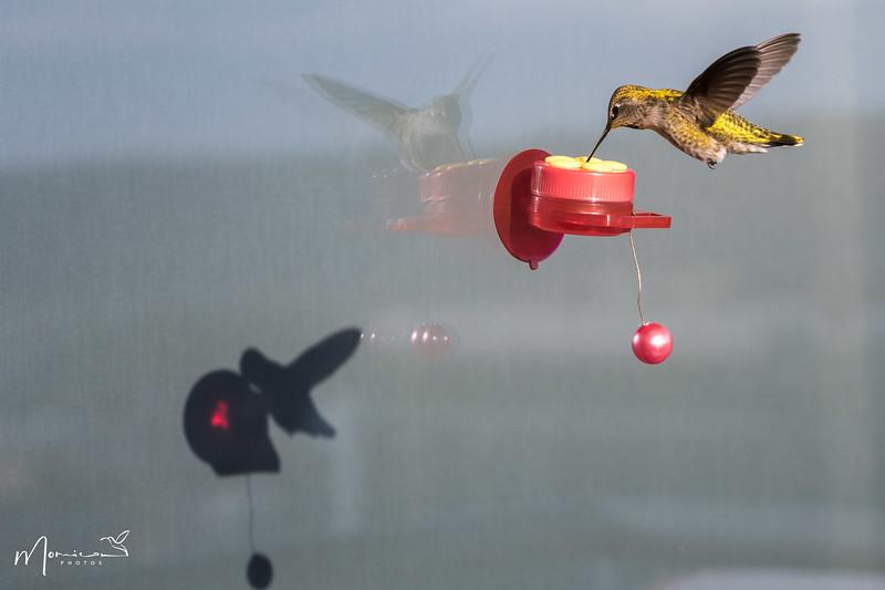 2021 - The Hummingbird Chronicles-4327_edit.jpg