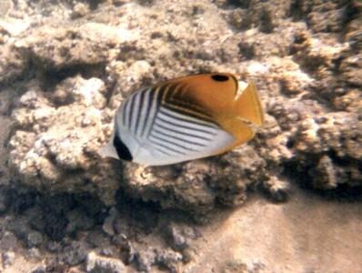 Poipu Fish